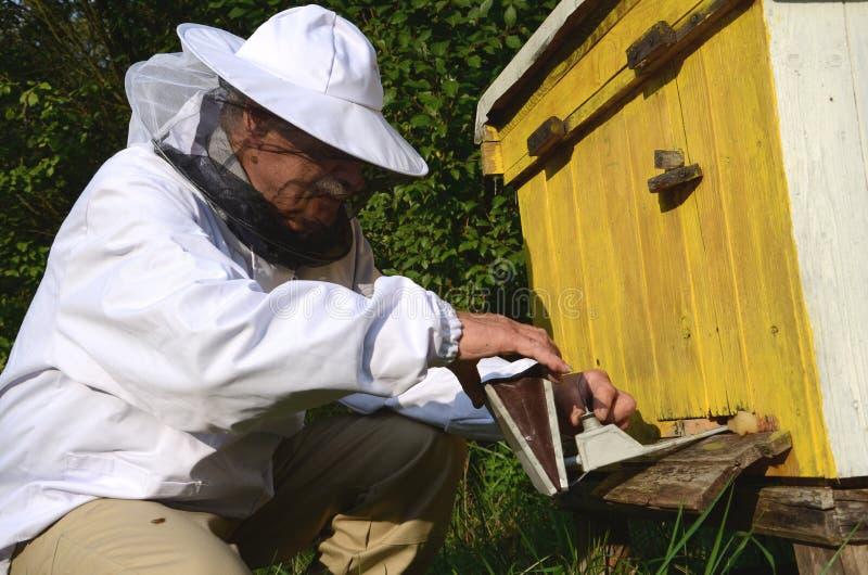 Ervaren apiarist die beroking maken tegen ziekten van bijen in bijenstal stock foto