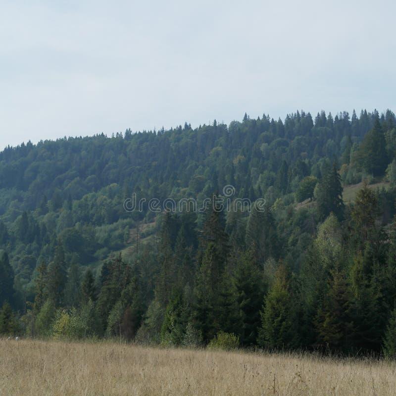 Ervas alpinas nos prados dos Carpathians imagens de stock royalty free
