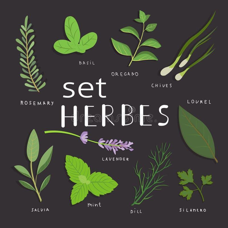 Ervas aromáticas ajustadas Ervas frescas e especiarias ajustadas Ilustração do vetor Eps 10 ilustração stock