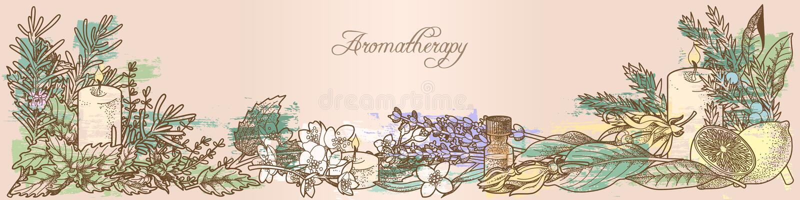 Ervas da aromaterapia ilustração royalty free