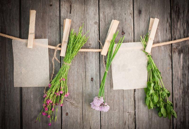 Ervas da medicina e anexo do papel a rope com pinos de roupa imagens de stock