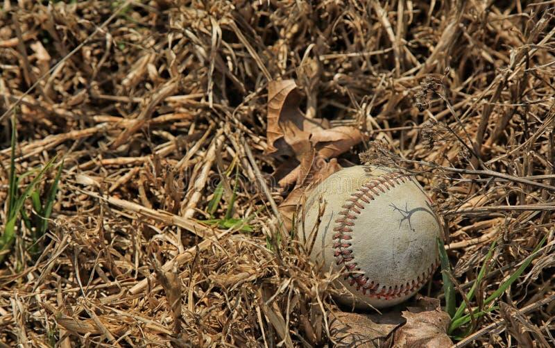 Ervas daninhas do basebol imagem de stock