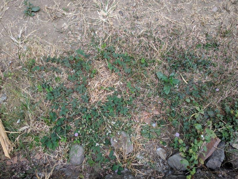 Ervas daninhas no fundo à terra foto de stock