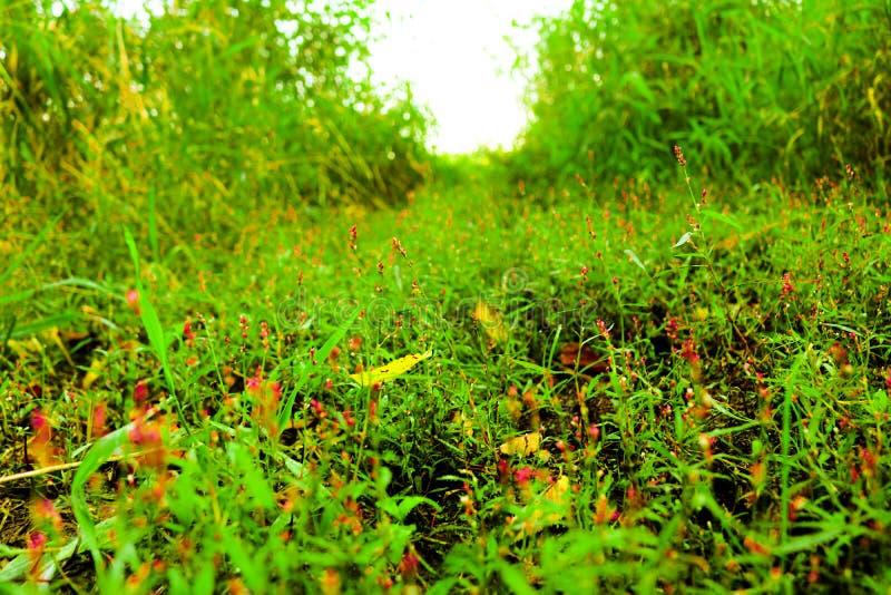 Ervas daninhas verdes fotografia de stock