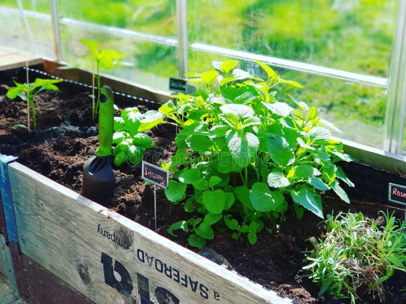 Ervas de jardinagem fotos de stock royalty free