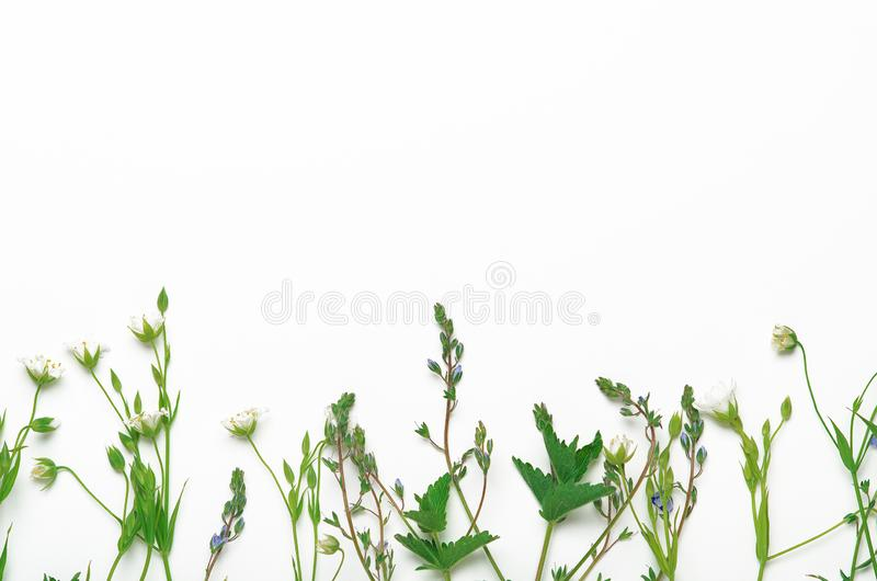 Ervas do campo, flores em um fundo branco Fundo floral natural Quadro, espaço da cópia, vista superior, configuração lisa foto de stock royalty free
