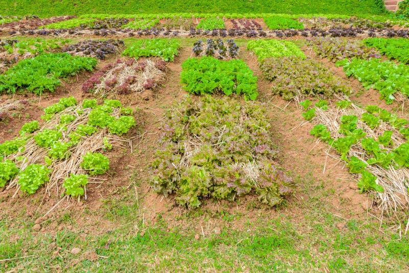 Ervas do jardim vegetal, e vegetais no jardim formal do quintal foto de stock royalty free