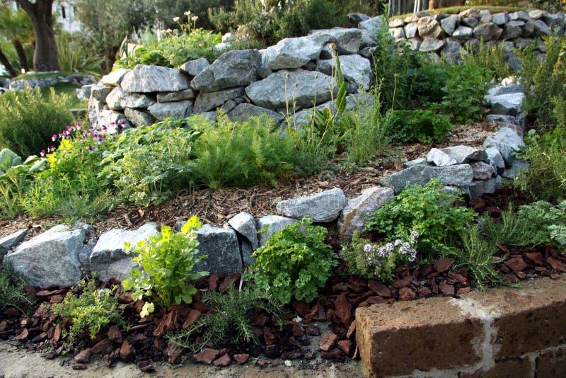 Ervas e cama aromática do jardim das plantas fotos de stock