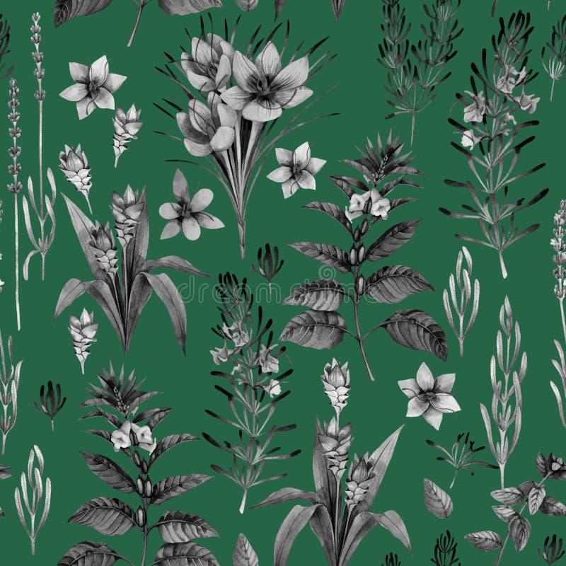 Ervas e especiarias da aquarela ilustração do vetor