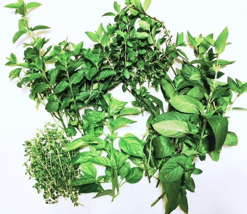 Ervas e especiarias frescas imagem de stock royalty free