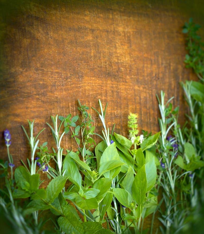 Ervas e especiarias frescas foto de stock