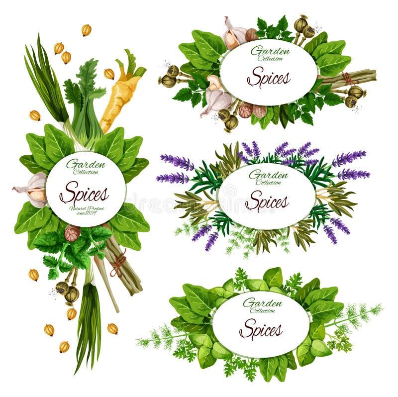 Ervas, especiarias e temperos ervais da exploração agrícola orgânica ilustração do vetor