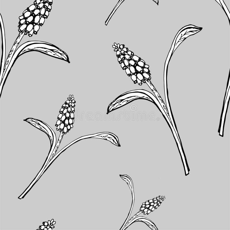 Ervas florais do whit da ilustração do vetor ilustração do vetor