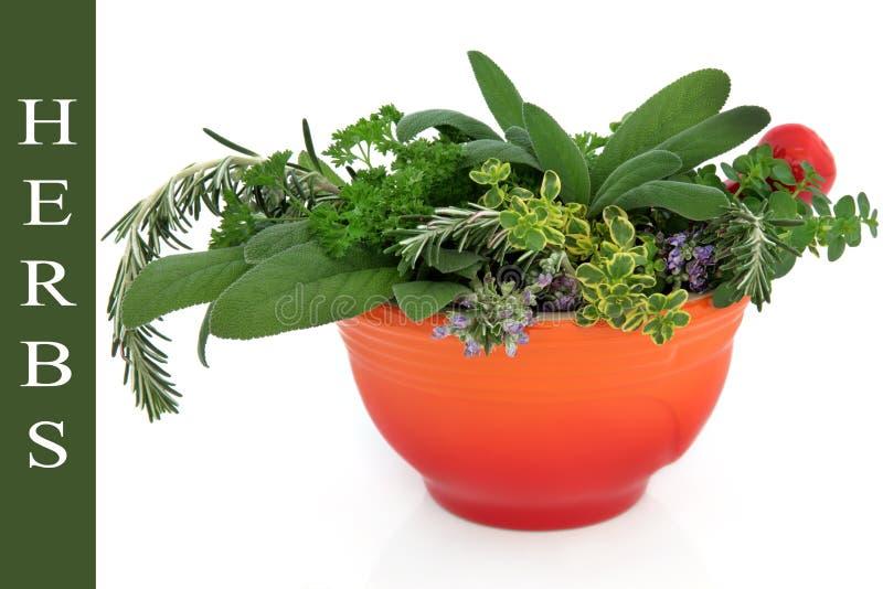 Download Ervas frescas foto de stock. Imagem de flor, saudável - 26504290