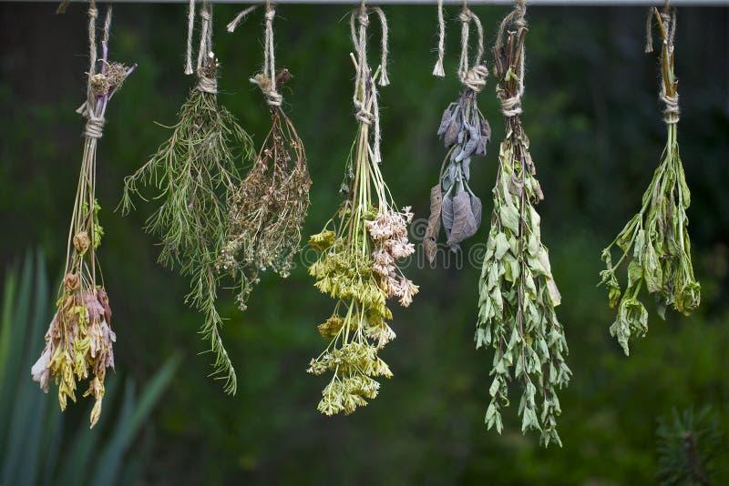 Ervas frescas de secagem fotografia de stock