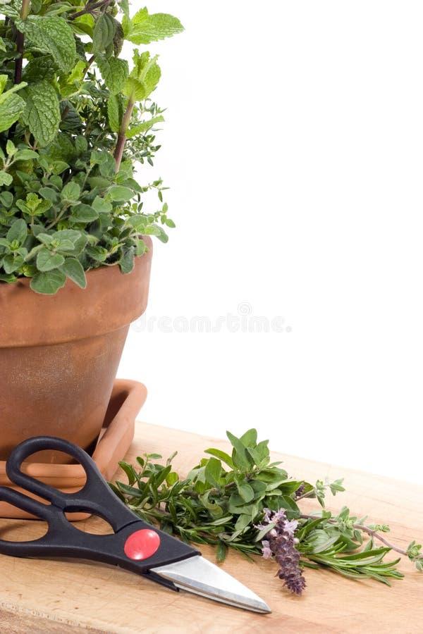 Ervas frescas do corte foto de stock
