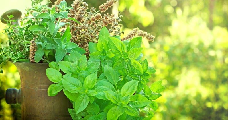 Ervas frescas e secas - especiarias fotos de stock