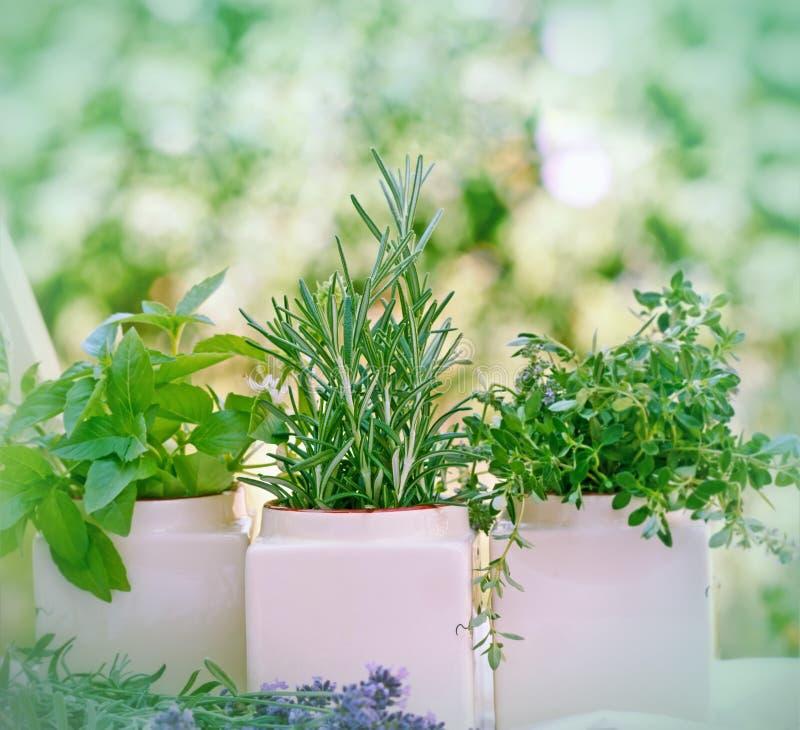 Ervas frescas - especiarias imagens de stock