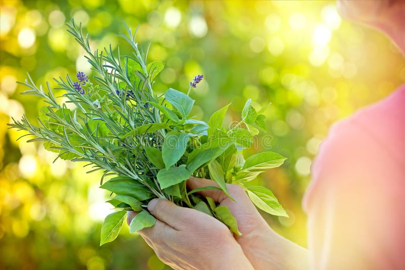 Ervas frescas - especiarias fotografia de stock royalty free