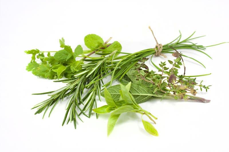 Ervas frescas misturadas fotografia de stock royalty free