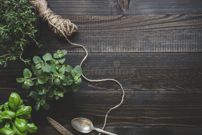 Ervas frescas na tabela de madeira escura, vista superior Fundo rústico com espaço da cópia fotografia de stock royalty free