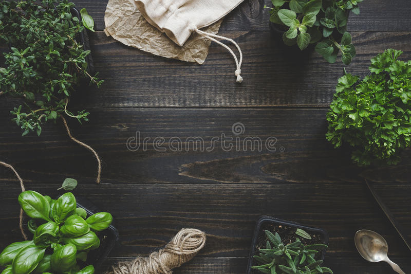 Ervas frescas na tabela de madeira escura, vista superior Fundo rústico com espaço da cópia foto de stock