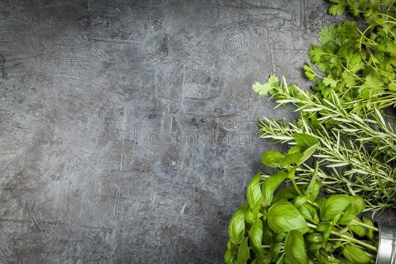 Ervas frescas no fundo cinzento fotografia de stock