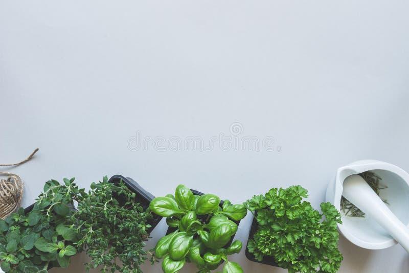 Ervas frescas no fundo cinzento, vista superior Fundo rústico com espaço da cópia imagens de stock royalty free