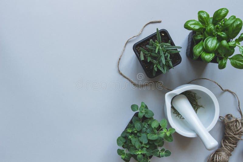 Ervas frescas no fundo cinzento, vista superior Fundo rústico com espaço da cópia fotografia de stock royalty free