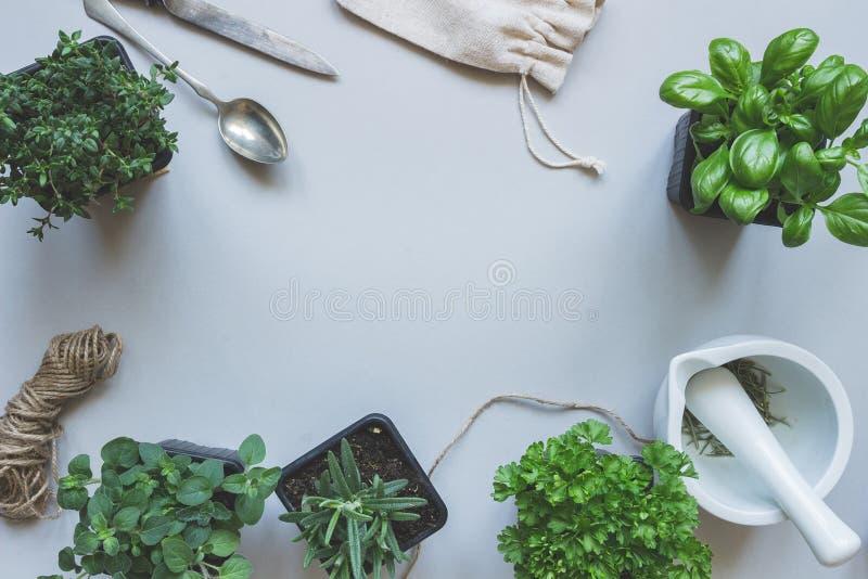 Ervas frescas no fundo cinzento, vista superior Fundo rústico com espaço da cópia imagens de stock