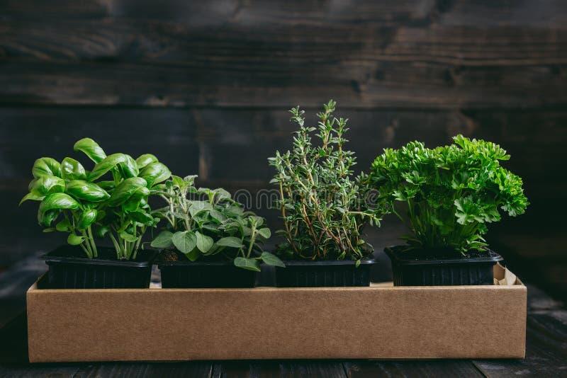 Ervas frescas no fundo de madeira com espaço da cópia imagens de stock royalty free