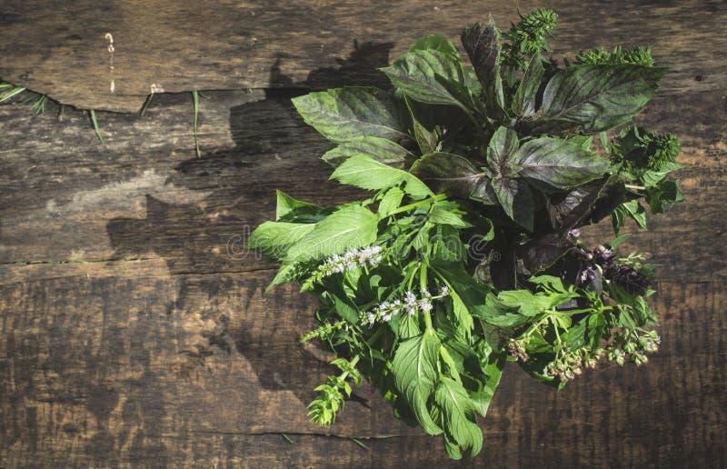 Ervas frescas no jardim fotografia de stock