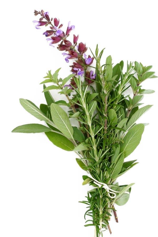 Ervas frescas - Rosemary, sábio, Oregano imagens de stock