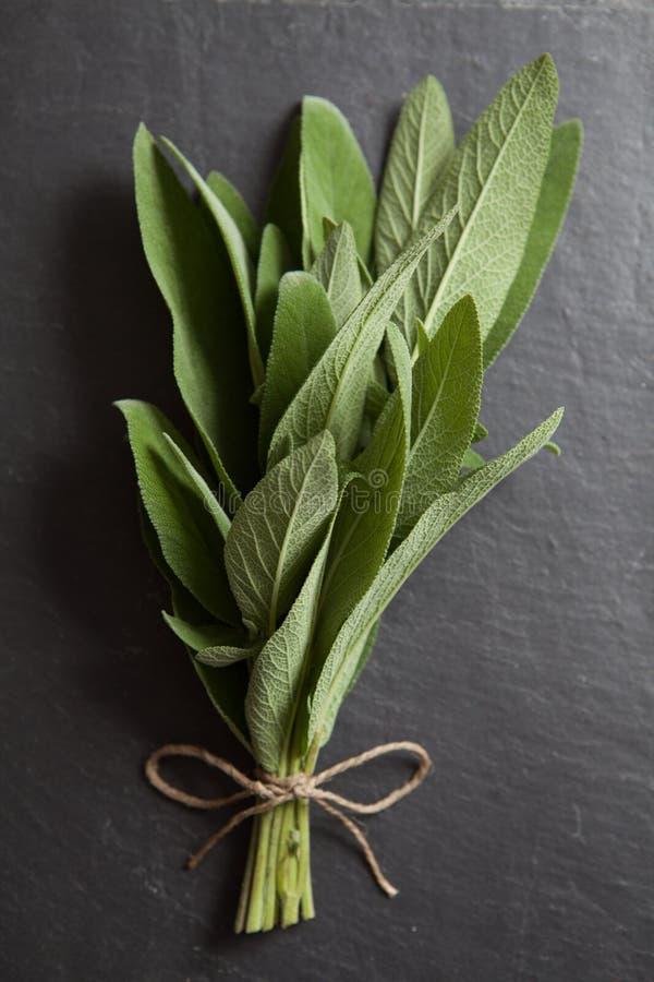 Ervas frescas: Sábio fotografia de stock