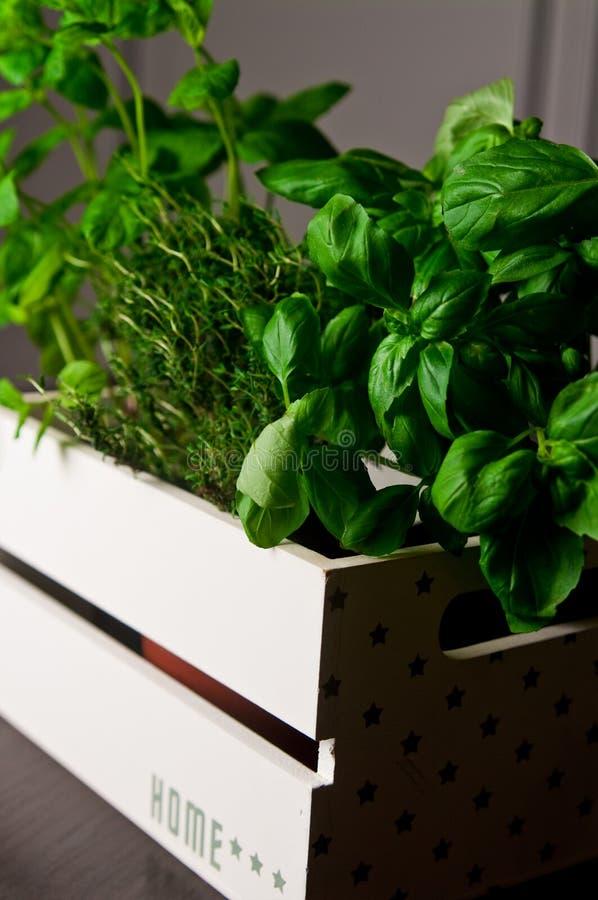 Ervas na caixa de madeira branca fotos de stock