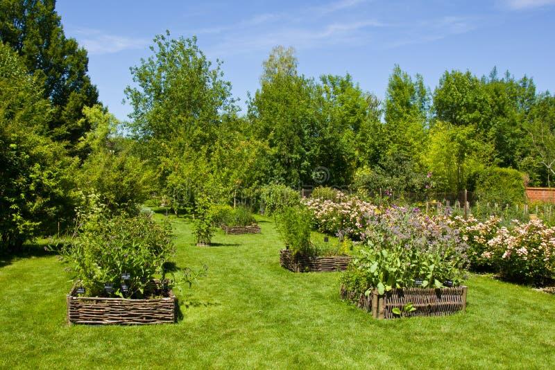 Ervas no jardim de rosas de Provins fotografia de stock royalty free