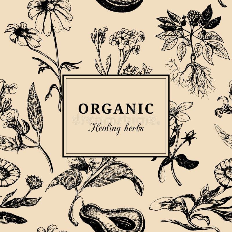 Ervas tiradas mão do vetor Fundo cura orgânico das plantas Cartão floral ou cartaz do vintage ilustração stock