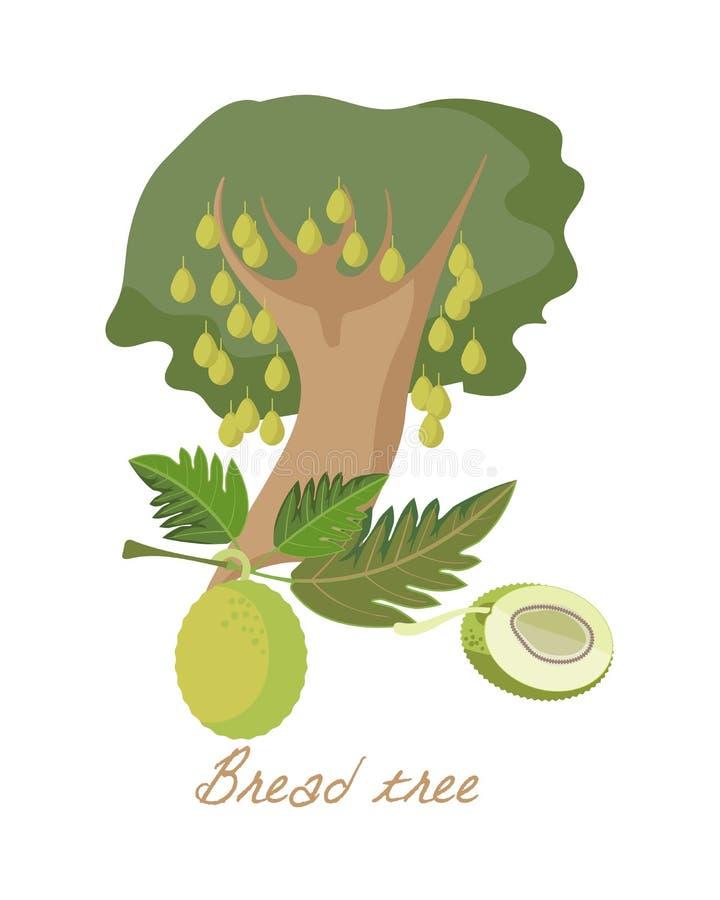 Ervas tropicais da floresta, plantas com folhas, flores, frutos Árvore de frutas-pão ilustração stock
