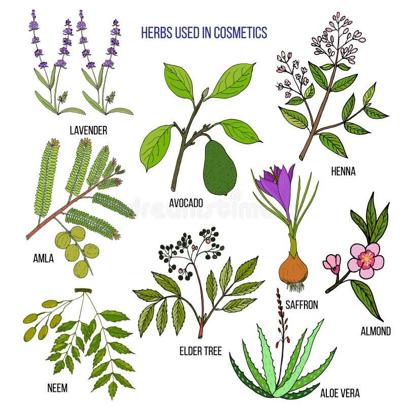 Ervas usadas na cosmetologia ilustração stock