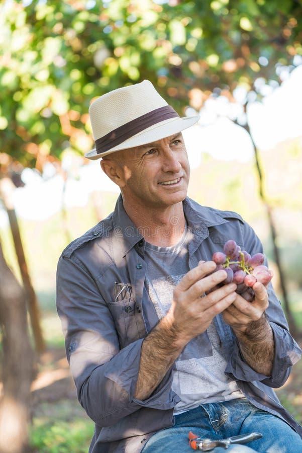 Erwachsener Gärtner, der in der Rebreihe arbeitet stockfotos