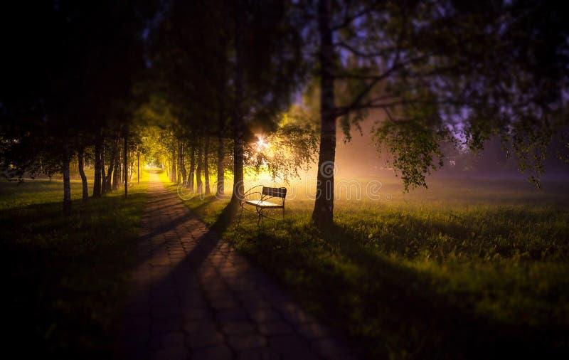 Erweichen Sie Randansicht der Nachtbank in der dunklen Baumgasse des Nebels mit Lampen und langen Schatten lizenzfreies stockfoto