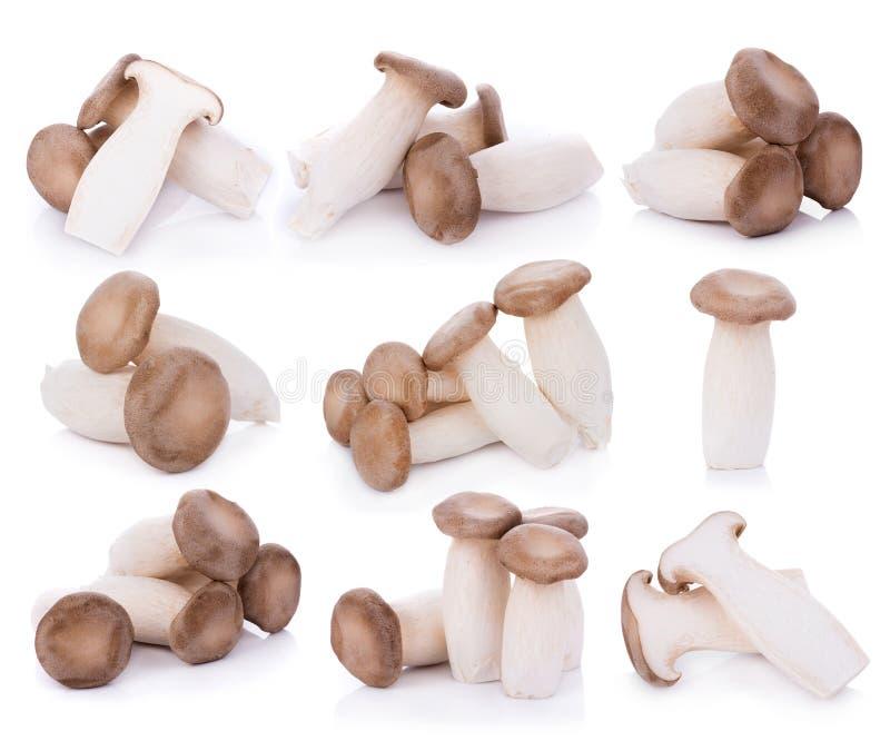 Eryngii Pleurotus гриба устрицы короля на белой предпосылке стоковая фотография