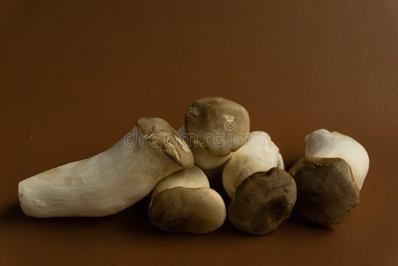 Eryngii Pleurotus гриба устрицы короля на коричневой предпосылке, Pleurotus Eryngii ( Король Устрица Mushroom) изолированный на к стоковые фото