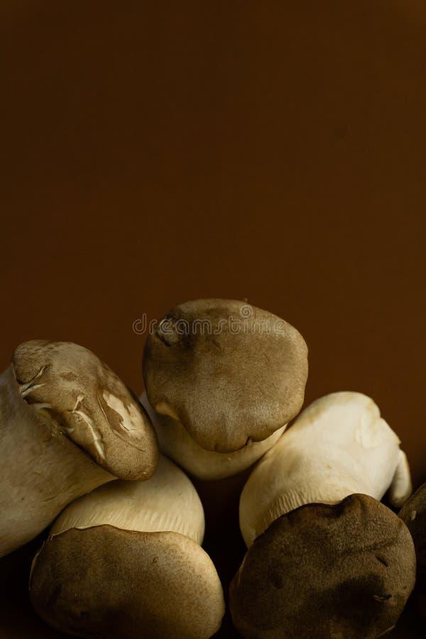 Eryngii Pleurotus гриба устрицы короля на коричневых предпосылке, Pleurotus Eryngii & x28; Король Устрица Mushroom& x29; изолиров стоковая фотография rf