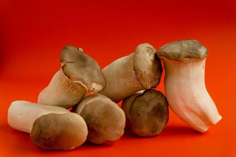 Eryngii Pleurotus гриба устрицы короля на красной предпосылке, Pleurotus Eryngii ( Король Устрица Mushroom) изолированный на крас стоковое фото rf