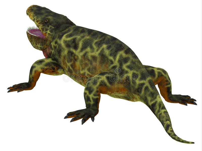 Eryops Dinosaur Tail. Eryops was an semi-aquatic ambush predator much like the modern crocodile and lived in Texas, New Mexico and the Eastern USA in the Permian royalty free illustration