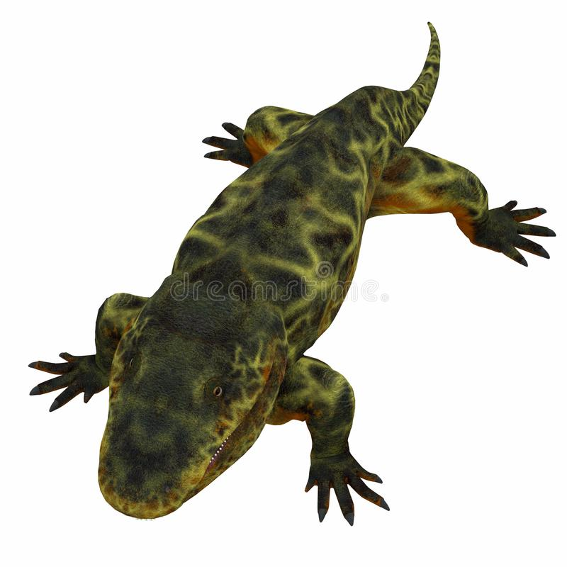 Eryops Dinosaur on White. Eryops was an semi-aquatic ambush predator much like the modern crocodile and lived in Texas, New Mexico and the Eastern USA in the vector illustration