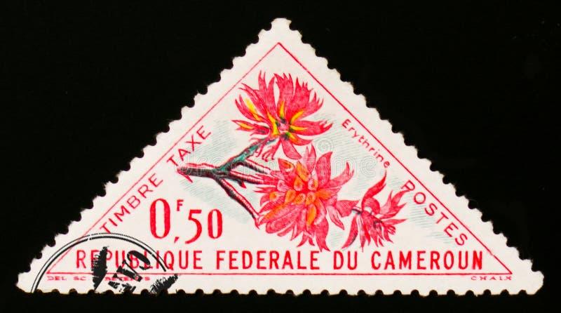 Erythrine kwiat około 1963, fotografia royalty free