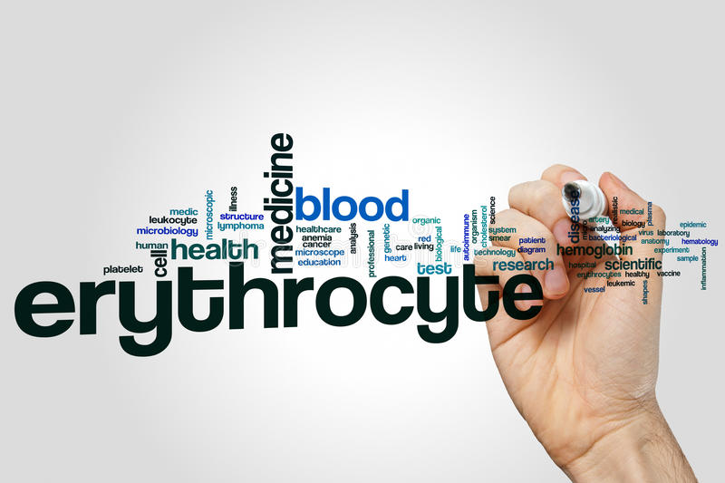 Erythrocyte word cloud concept on grey background royalty free stock photo