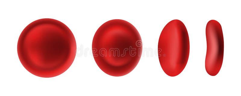 Erytrociet of rode bloedcellen op wit wordt geïsoleerd dat vector illustratie